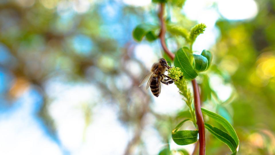 Bee, Nature, Nectar, Leaf, Tree, Wing, Sting, Macro