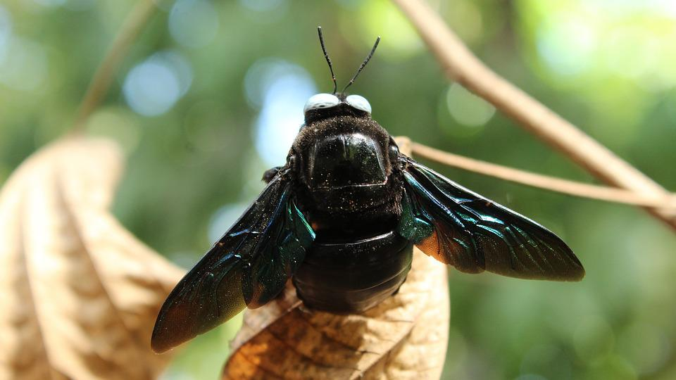 Insect, Wing, Nature, Fly, Animal, Wildlife, Outdoors