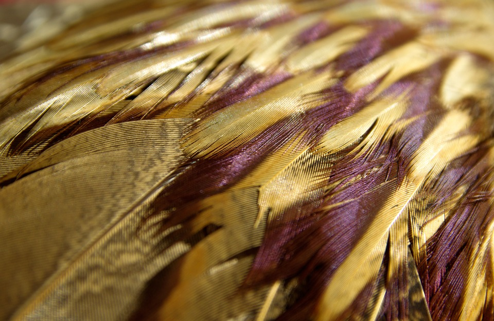 Pheasant, Wing, Feathers, Texture, Bird