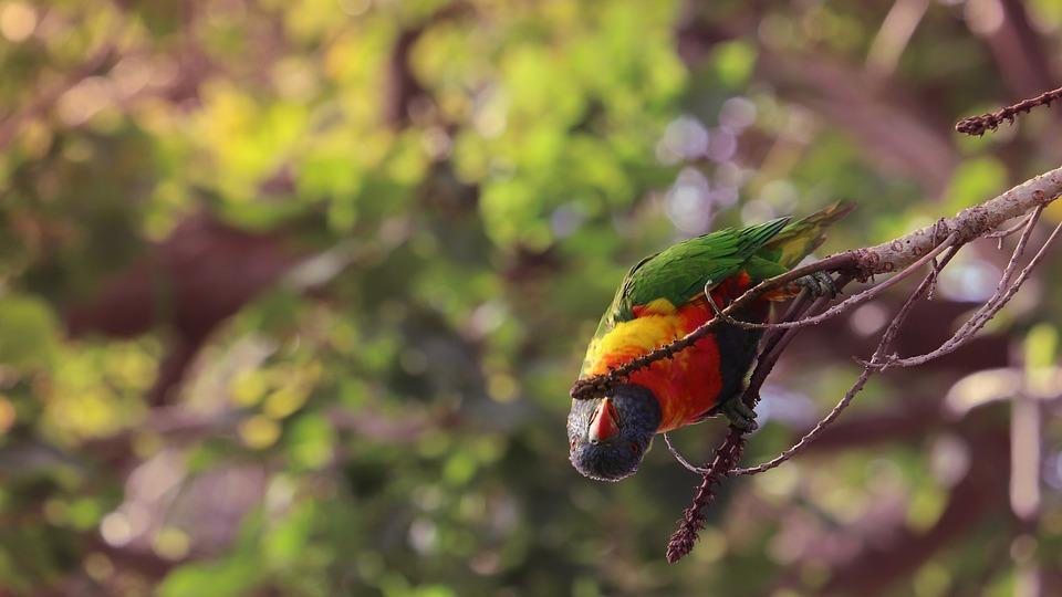 Parrot, Bird, Aviary, Flight, Winged, Feeding, Budgie