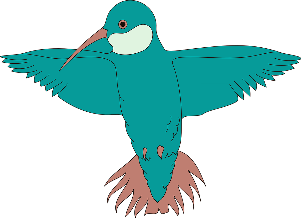 Hummingbird, Bird, Spread, Wings, Beak, Feathers