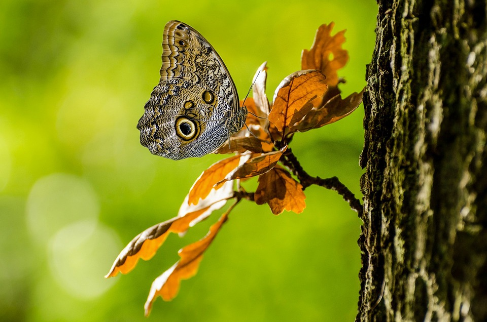 Butterfly, Wings, Tropical, Brown, Camouflage