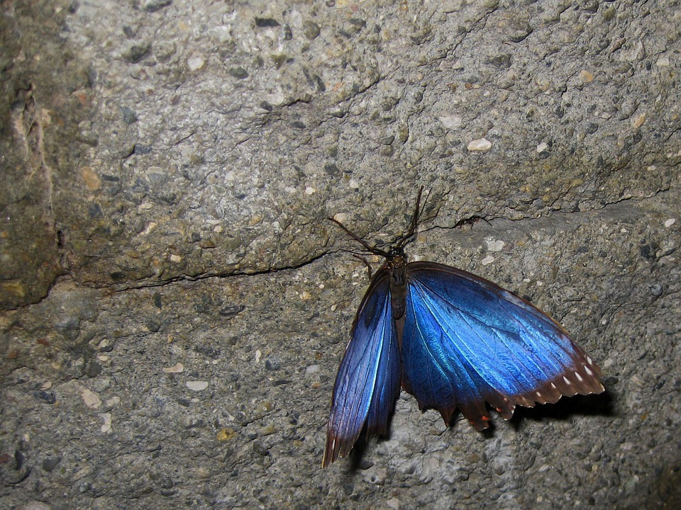 Butterfly, Brilliant, Color, Stone, Wall, Wings
