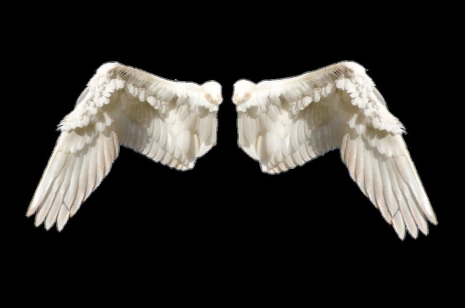 Wings, Tale, Fairy, Fantasy, Art, Magic, Fairytale