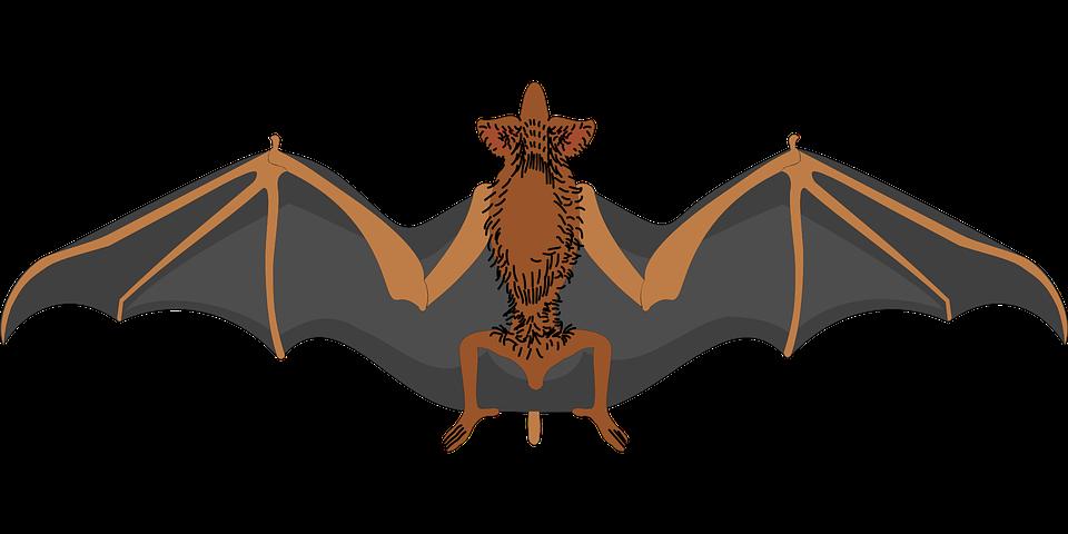Bat, Spread, Wings, Halloween, Scary, Fear, Phobia
