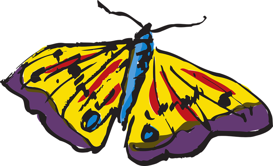 Butterfly, Colorful, Wings, Insect, Yellow, Blue