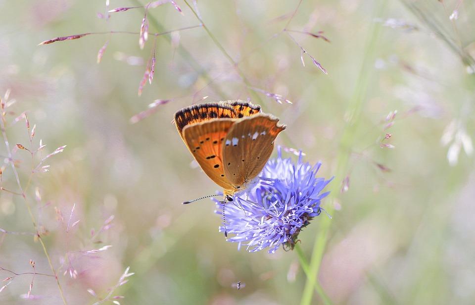 Butterfly, Insect, Butterflies, Macro, Summer, Wings