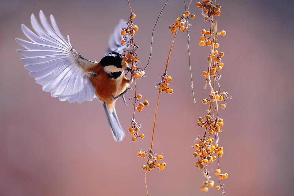 Bird, Wings, Fluttering, Nature, Animal, Berries