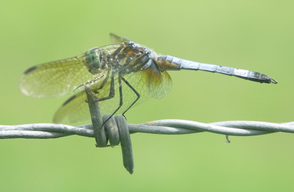 Dragonfly, Insect, Bug, Wings, Nature, Outside