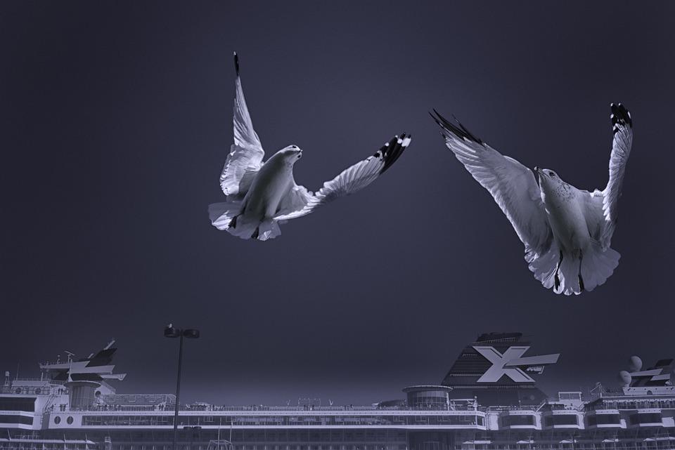 Seagulls, Birds, Animals, Flight, Wings, Ocean, Ship