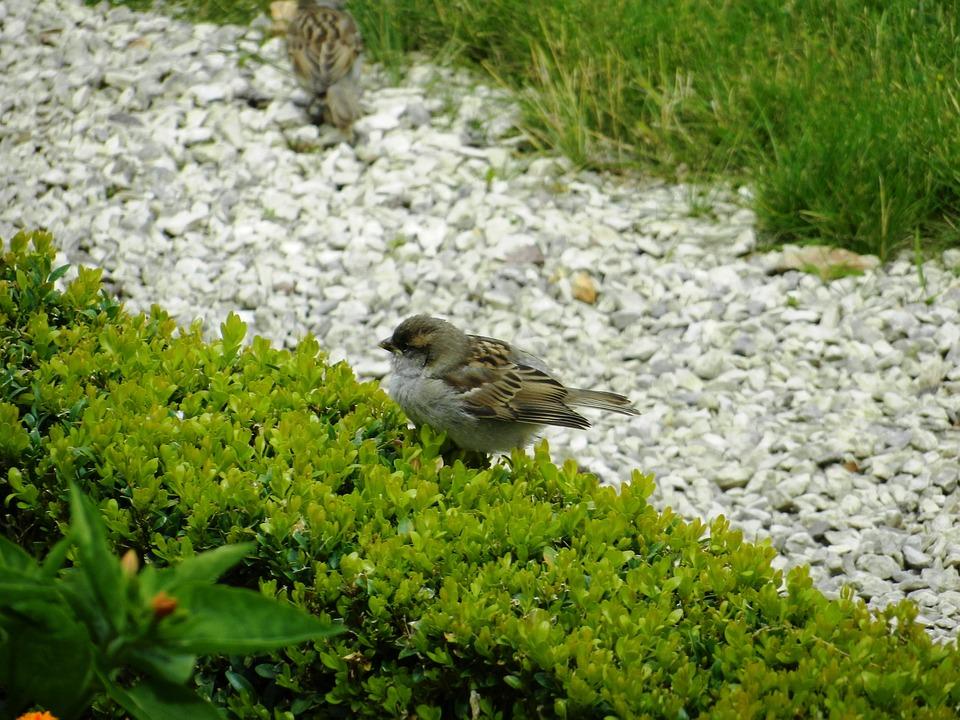 Bird, Birds, Wings, Park, Nature, Animals, Grass, Pen