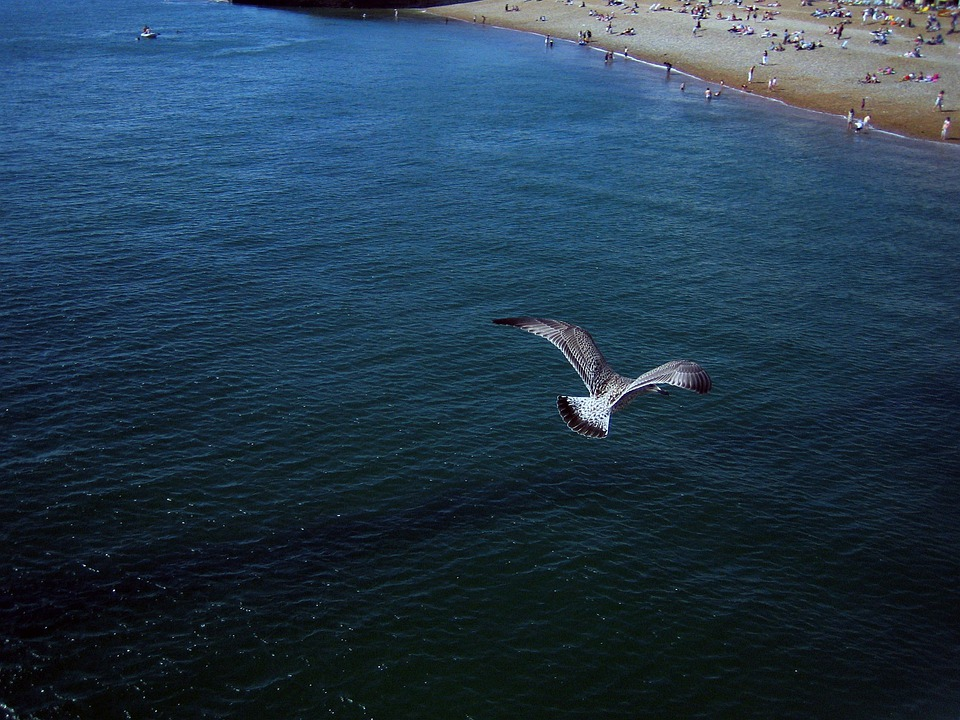 Brighton, Seagull, Sea, Bird, Fly, Wings, Feather