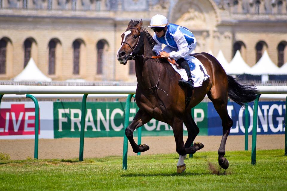 Jockey, Contest, Horse, Sport, Race, Winner, Victory