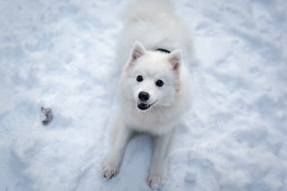 Winter, Snow, Frosty, Cold, Cute, Animal, Dog, Nature