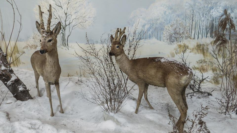 Doe, Winter, Animal, Museum, Decoration, Wildlife
