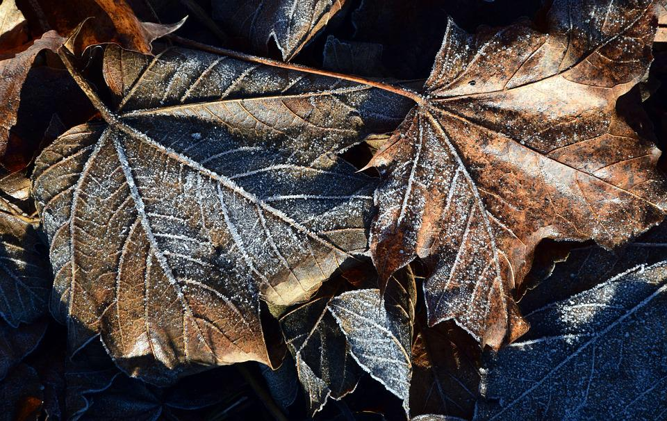 Leaves, Autumn, Fall Foliage, Frost, Winter, December