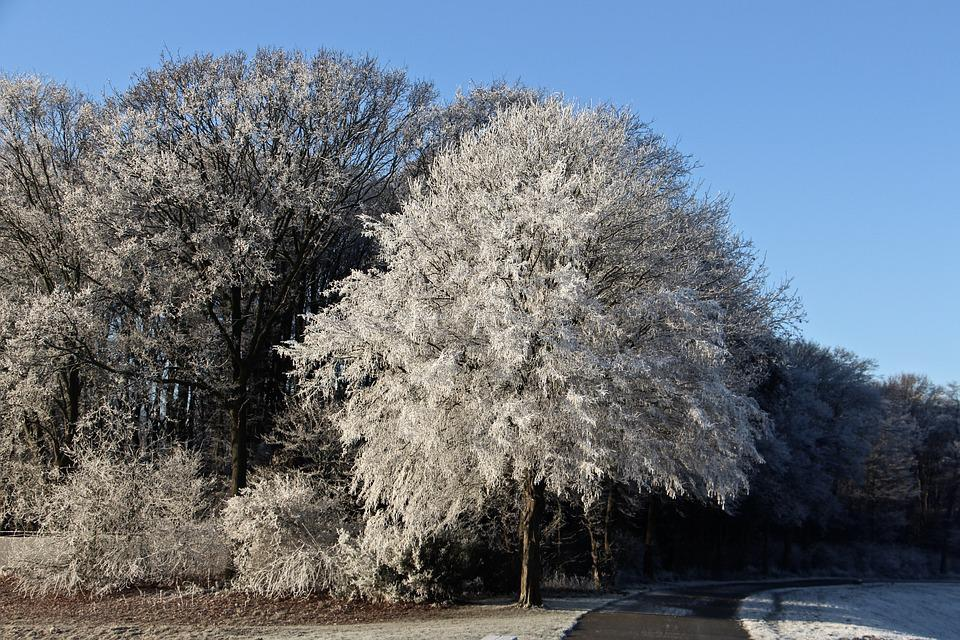 Winter, Landscape, Away, Frost, Sky, Blue, Wintry, Cold