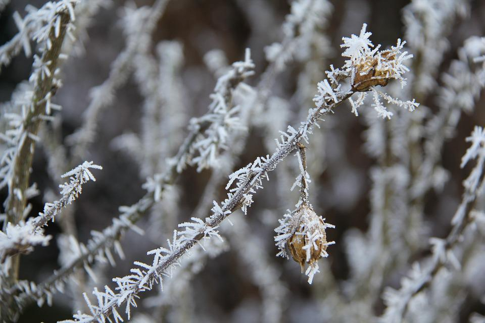 Frost, Christmas, Winter, Cold, Background