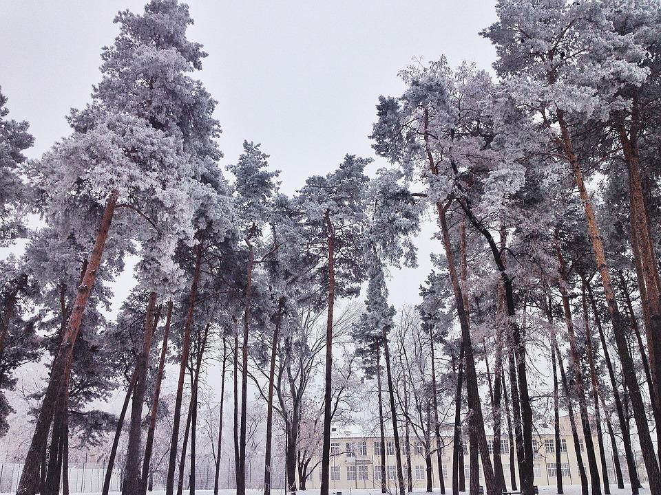 Winter, Schnee, Bäume