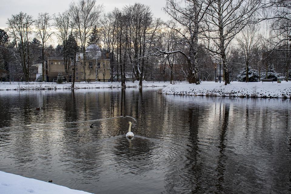 Swan, River, Winter, Bank, Snow, Trees, Bird, Animal