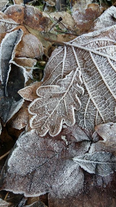 Frost, Blätter, Winter