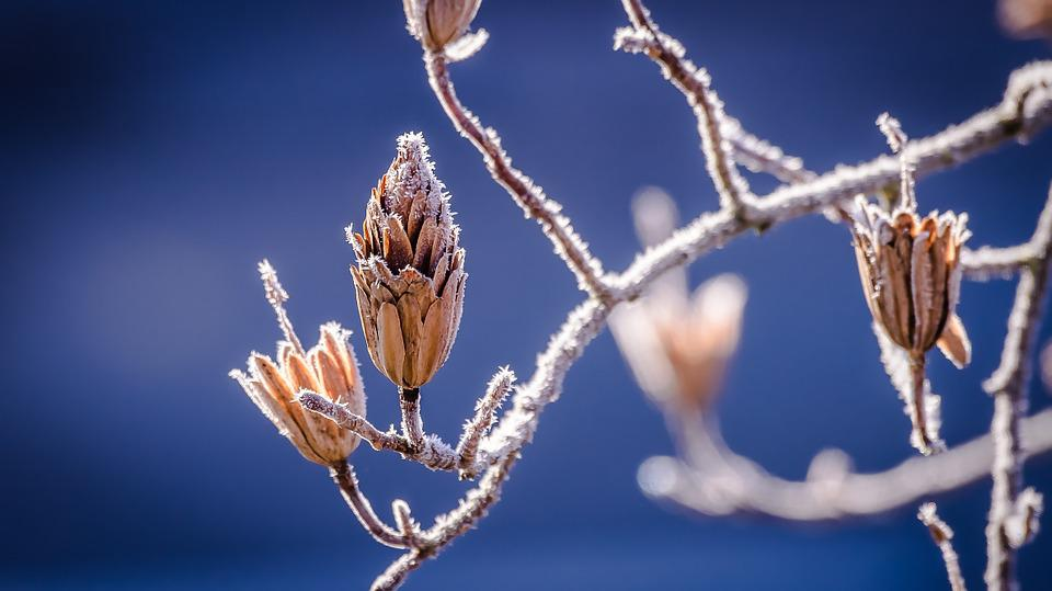 Winter, Nature, Bud, Branch, Road, Frost, Cold, Icy