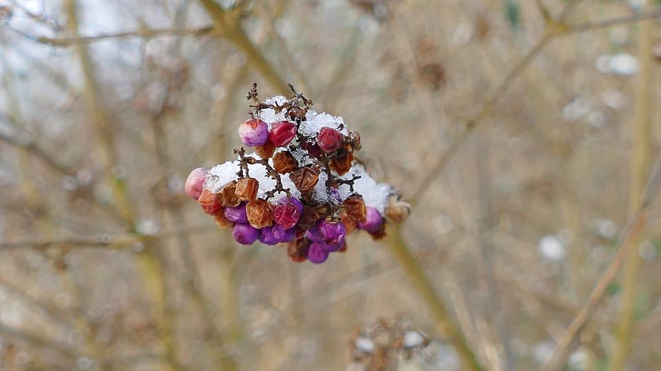 Nature, Plant, Season, Winter, Outdoor, Bush, Cold
