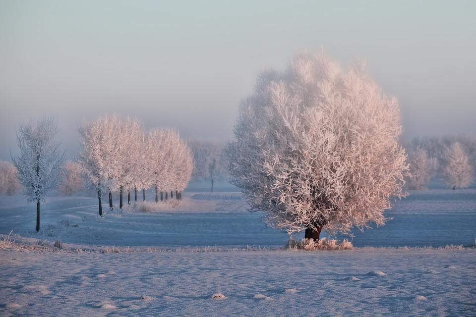 Winter, Morning Sun, Trees, Snow, Cold Ice, Fog, Mood