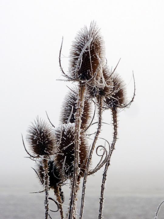 Thistles, Winter, Sky, Gel, Cold, Nature, Landscape