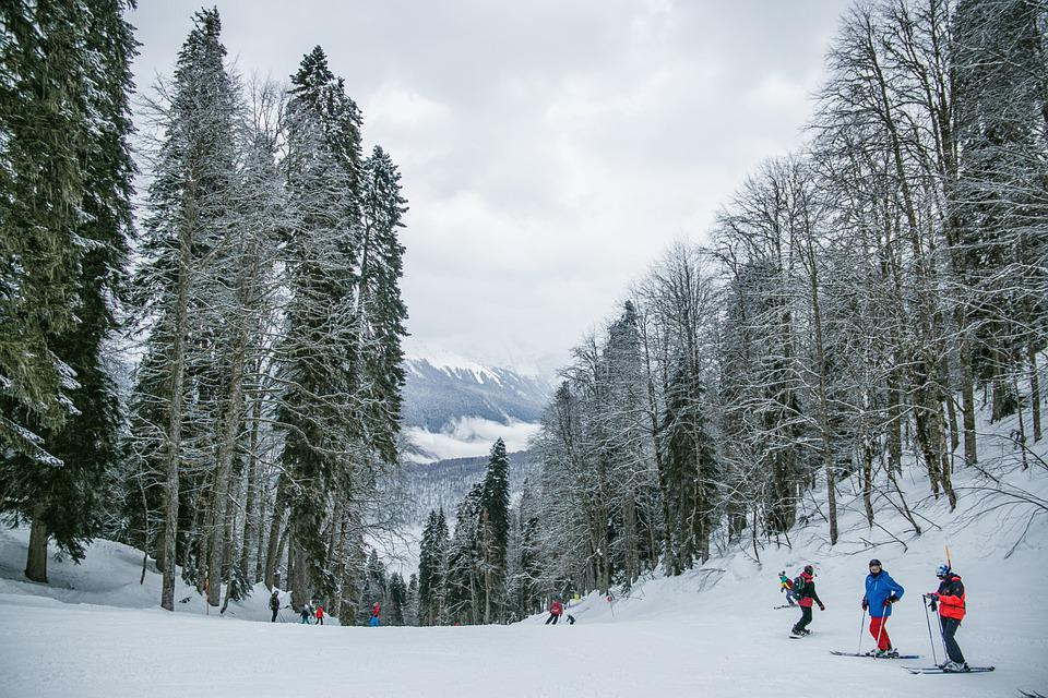 Snow, Skiing, People, Trees, Forest, Winter, Cold