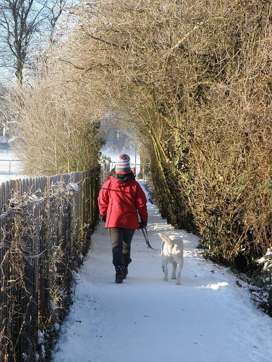 Winter, Snow, Path, Dog Walk