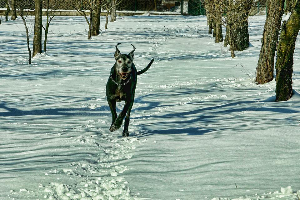 Snow, Winter, Nature, Dog, Cold, Winter's Day, Run