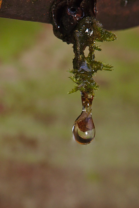 Winter, Moss, Drop Of Water, Reflection, Mirroring