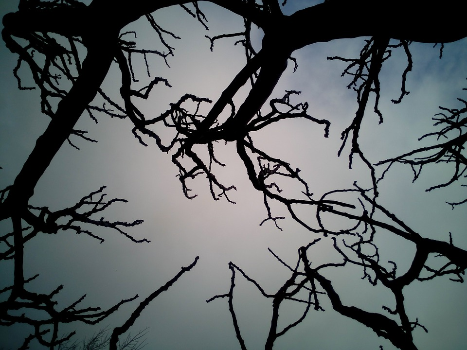 Sky, Branches, Dry, Trees, Winter, Tree, Blue, Nature