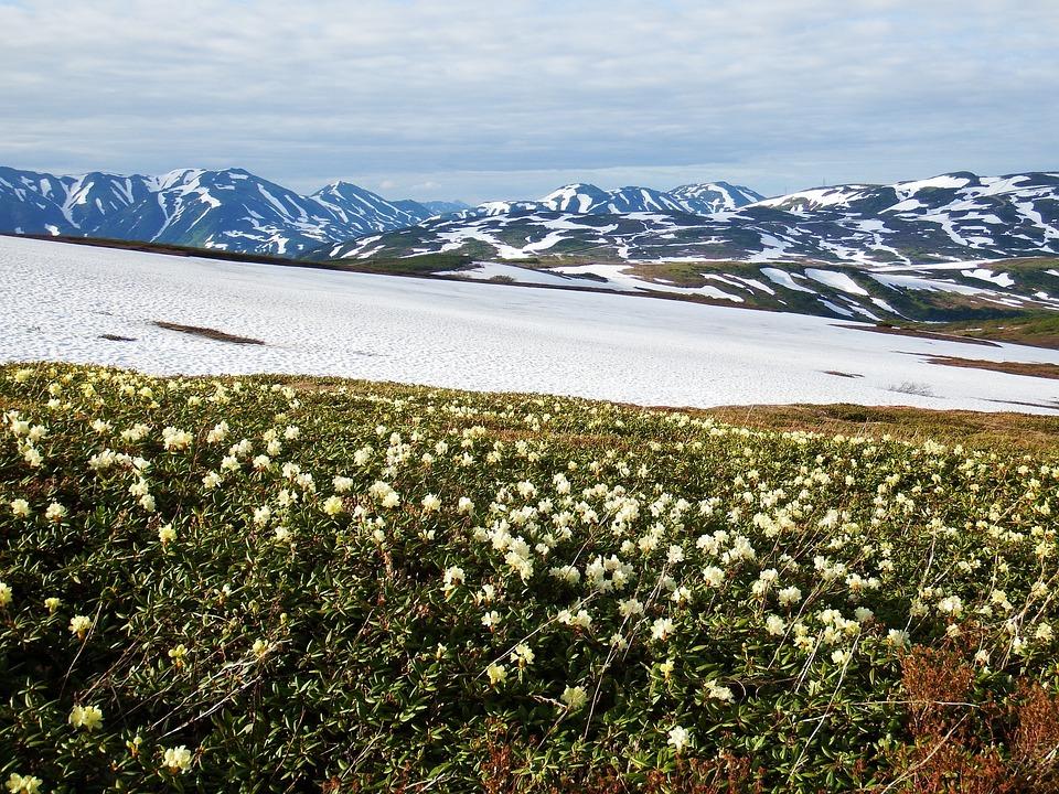 Mountain Plateau, Summer, Winter, Grass, Flowers