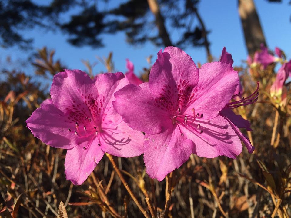 Winter Flowers, Winter, Flowers, Nature