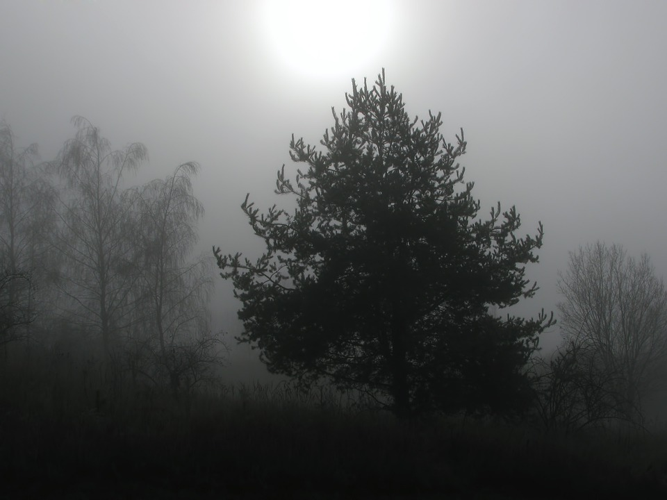 Tree, Trees, Fog, Foggy, Winter, Wintry, Winter Sun