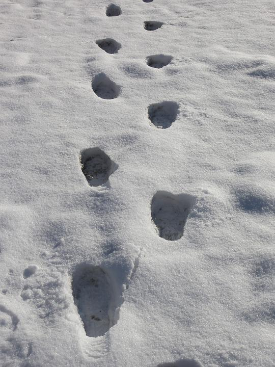 Footprints, Snow Prints, Snow, Winter, Tracks