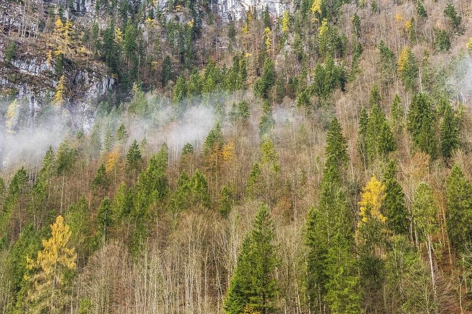 Forest, Fog, Nature, Trees, Autumn, Winter, Mood