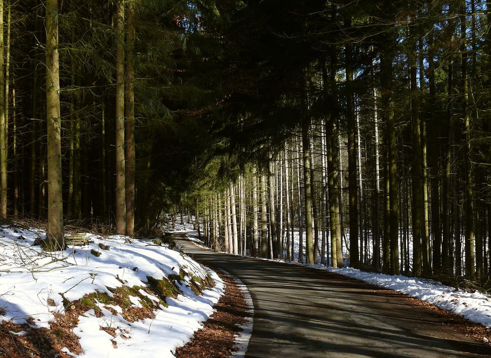Winter, Forest, Forest Path, Snow, Landscape