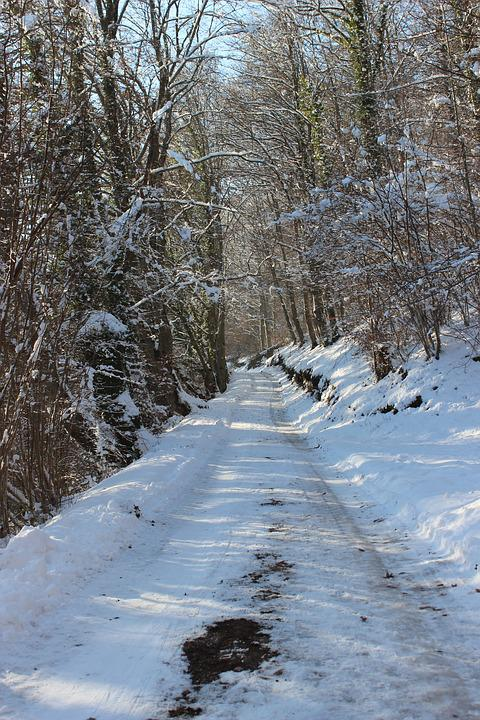 Lane, Snow, Winter, Wintry, Winter Forest, Nature