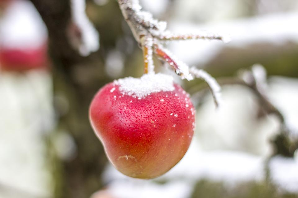 Apple, Winter, Snow, Frost, Ice, Icing, Fruit