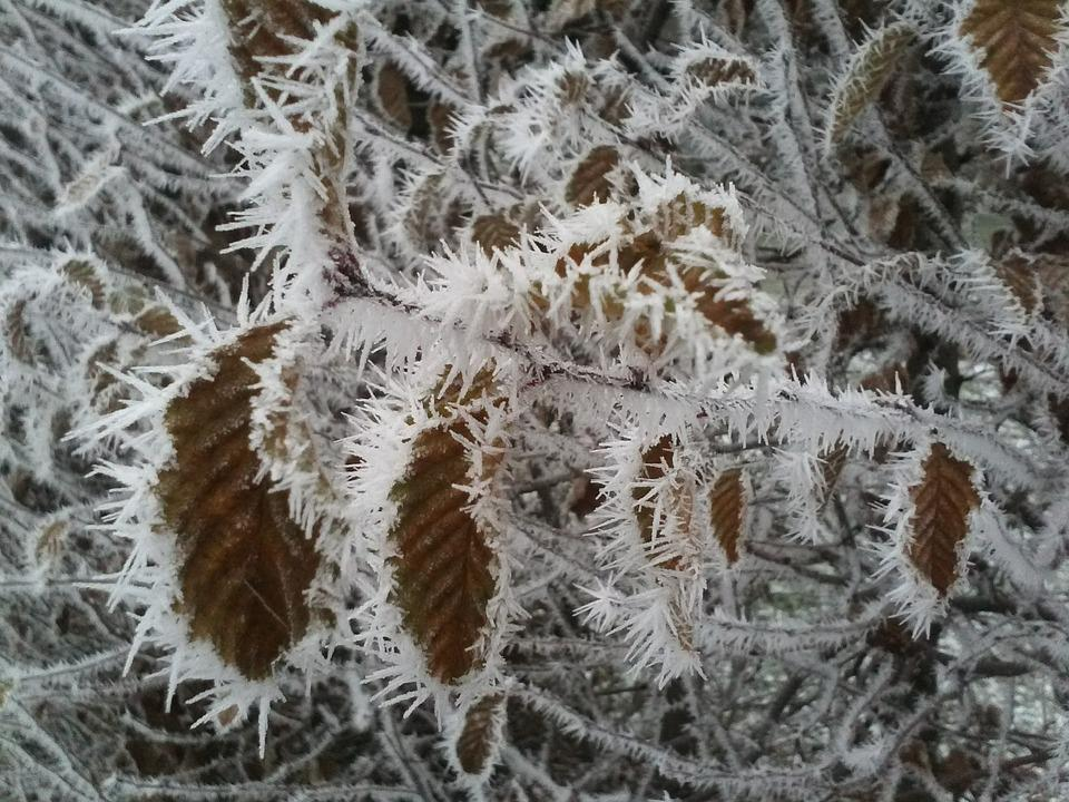 Frost, Leaves, Ice, Winter, Cold, Dry, Eiskristalle