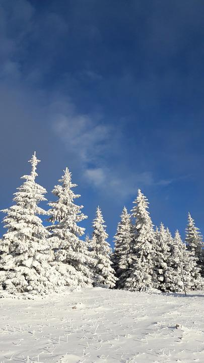 Snowy Trees, Winter Fun, The Beauty Of The, Winter