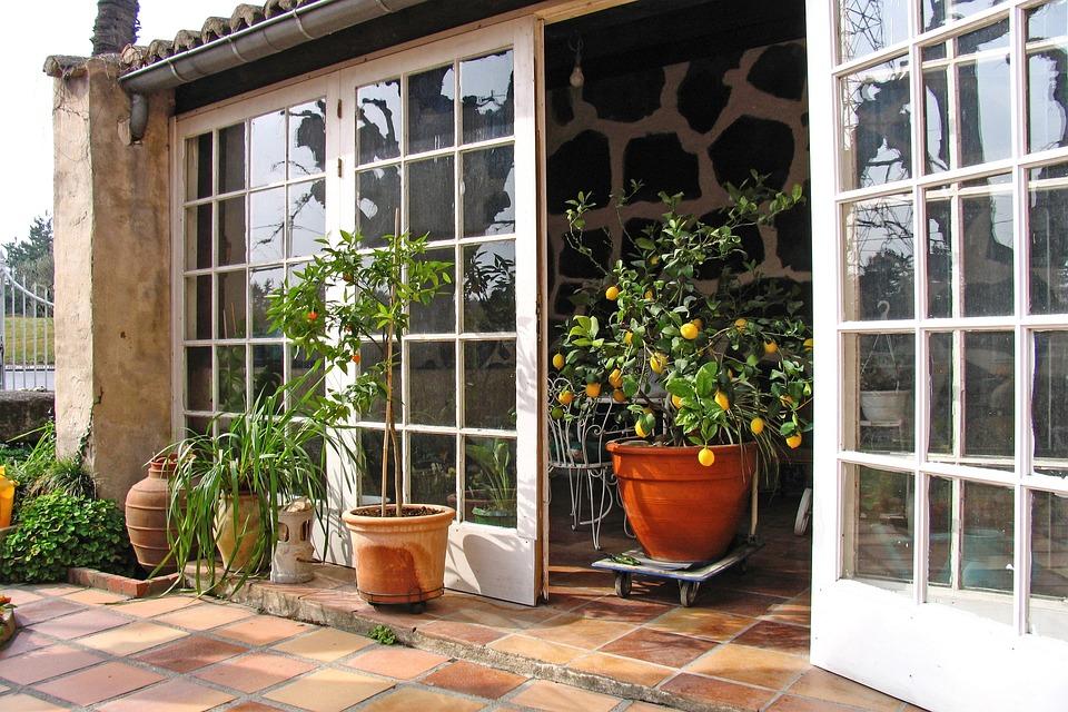 Lemons, Lemon Tree, Winter Garden