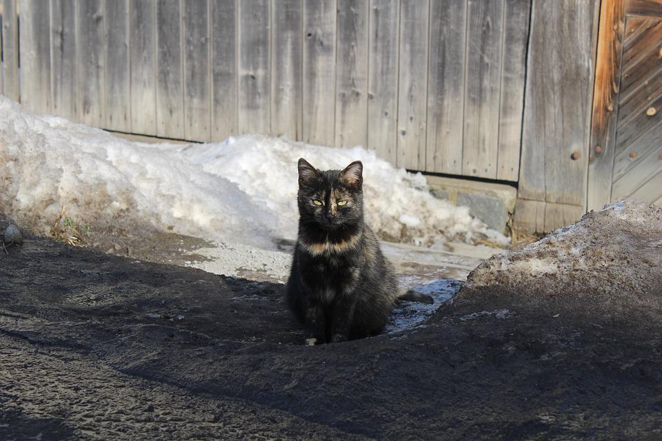 Black Cat, Cat, Winter Colors, Winter, Garden, Looking