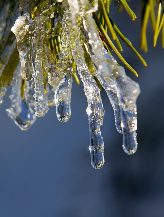Ice, Winter, Frozen, Icicle, Plant, Frost, Black Forest