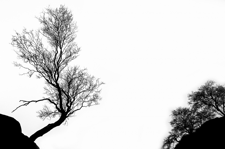 Tree, Winter, Branch, Isolated, Outline, White