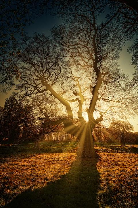 Tree, Kahl, Sunbeam, Light, Winter, Evening, Sun