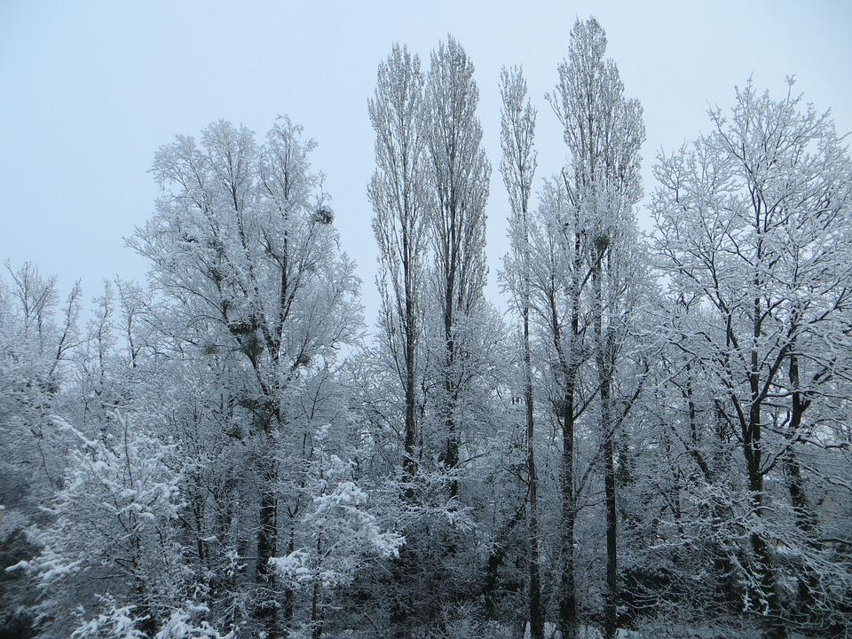 Trees, Snow, Winter, Cold, Nature, Winter Landscape